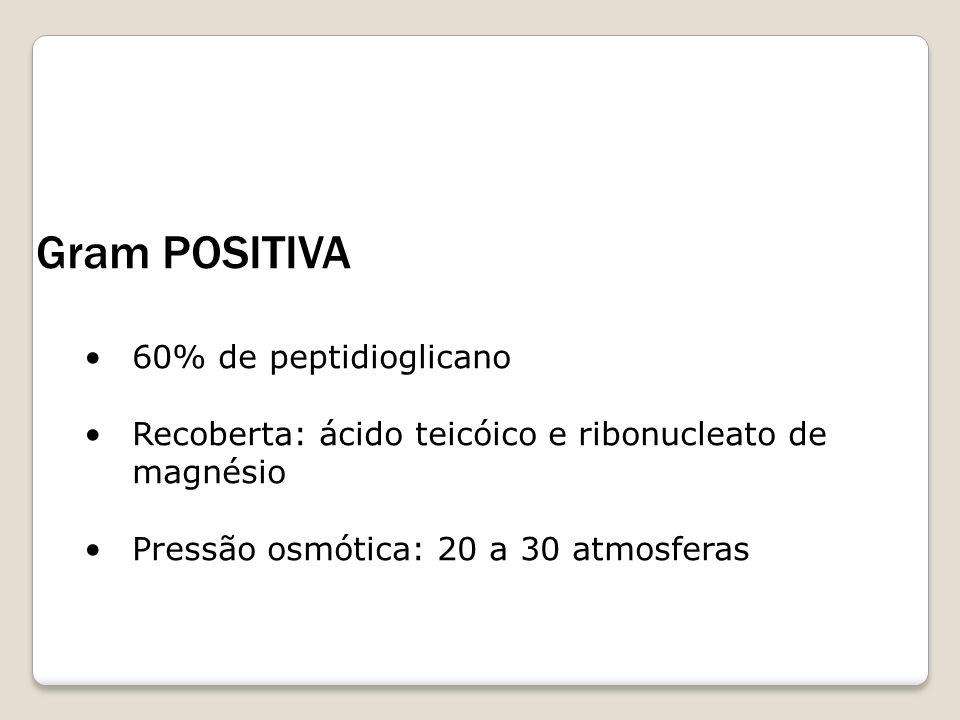Gram POSITIVA 60% de peptidioglicano