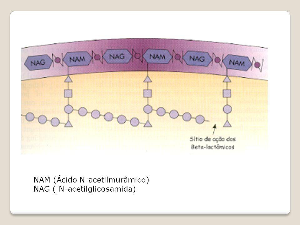 NAM (Ácido N-acetilmurâmico)
