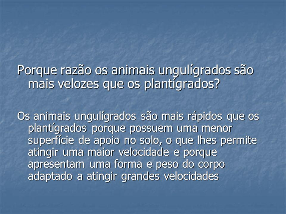 Porque razão os animais ungulígrados são mais velozes que os plantígrados