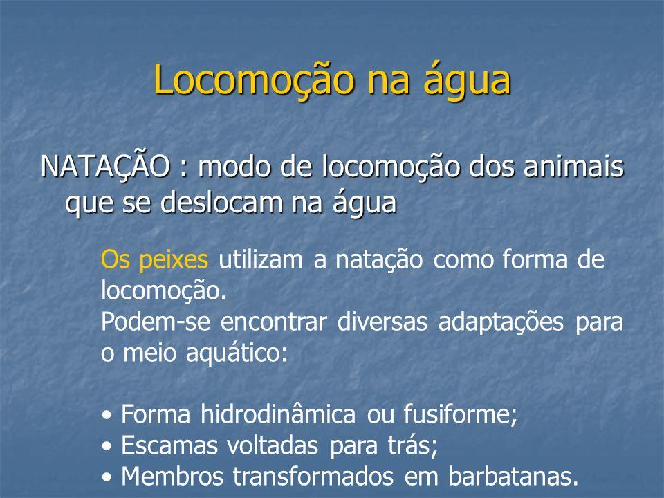 Locomoção na água NATAÇÃO : modo de locomoção dos animais que se deslocam na água. Os peixes utilizam a natação como forma de locomoção.