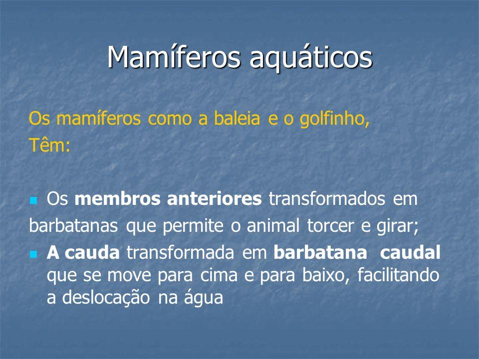 Mamíferos aquáticos Os mamíferos como a baleia e o golfinho, Têm: