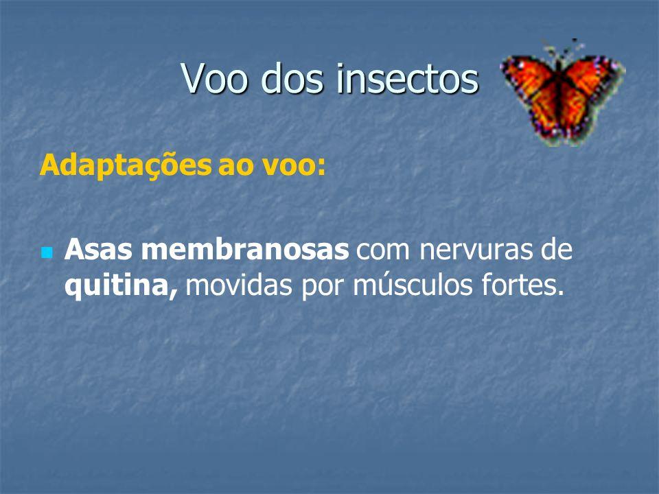 Voo dos insectos Adaptações ao voo: