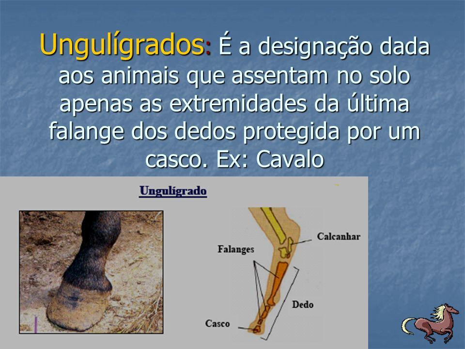 Ungulígrados: É a designação dada aos animais que assentam no solo apenas as extremidades da última falange dos dedos protegida por um casco.