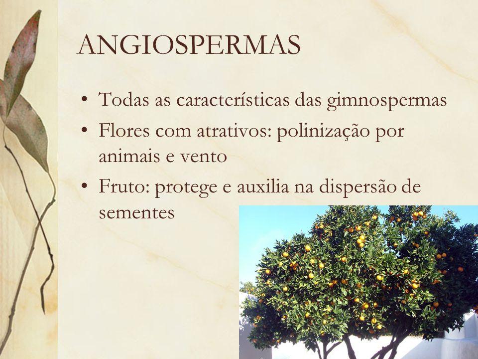 ANGIOSPERMAS Todas as características das gimnospermas