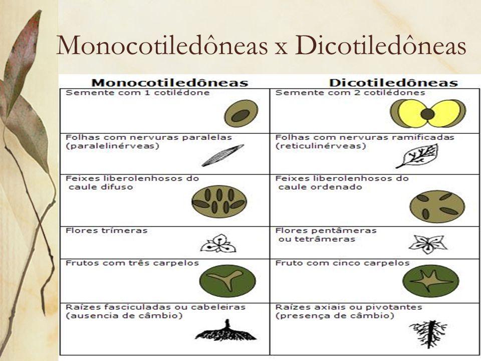 Monocotiledôneas x Dicotiledôneas