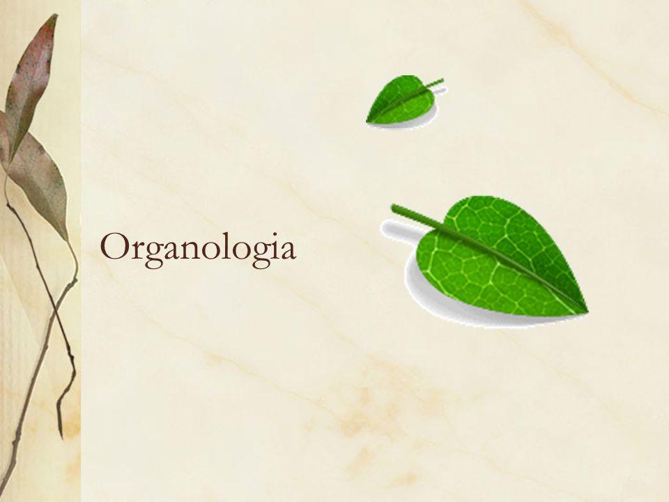 Organologia