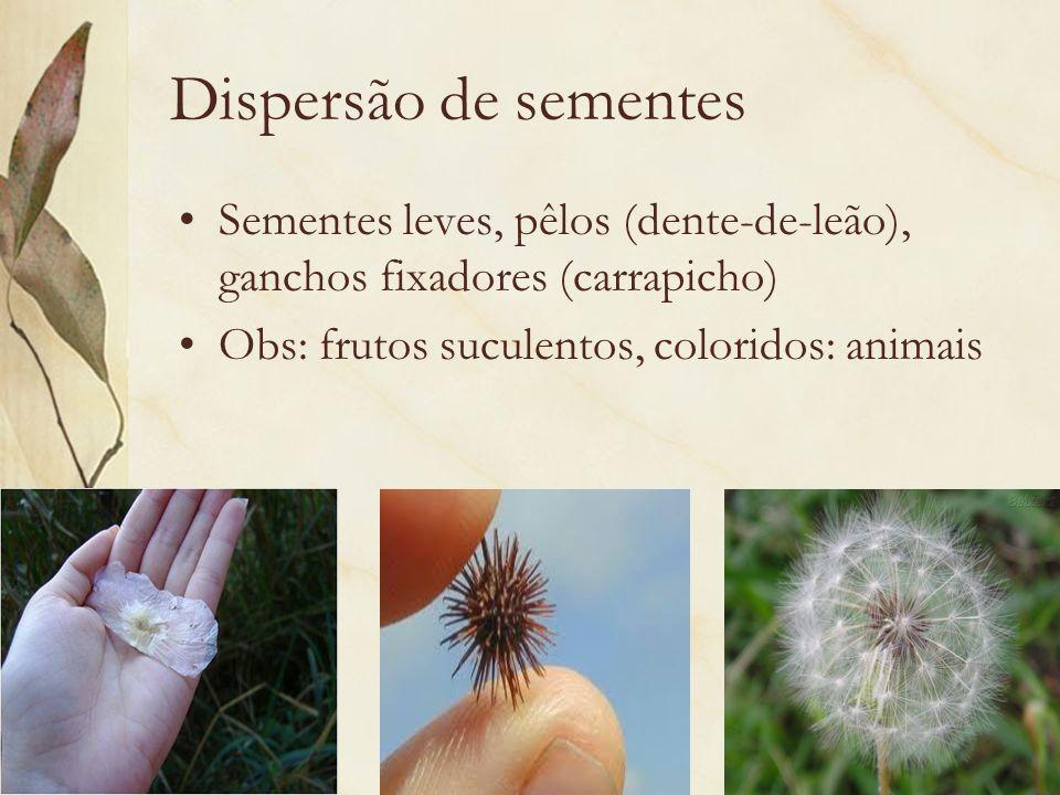 Dispersão de sementes Sementes leves, pêlos (dente-de-leão), ganchos fixadores (carrapicho) Obs: frutos suculentos, coloridos: animais.