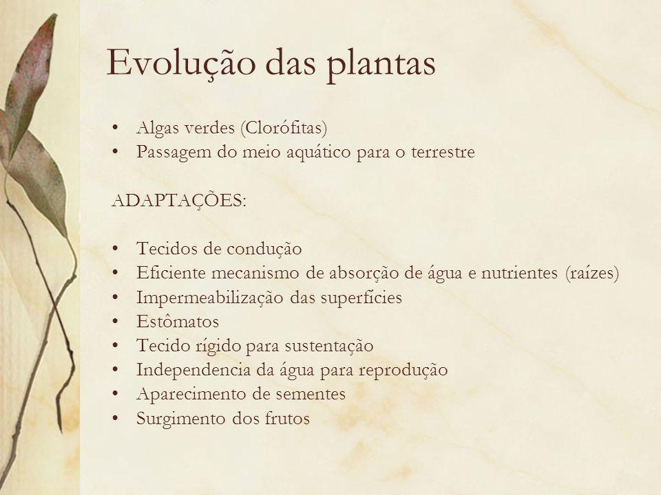 Evolução das plantas Algas verdes (Clorófitas)