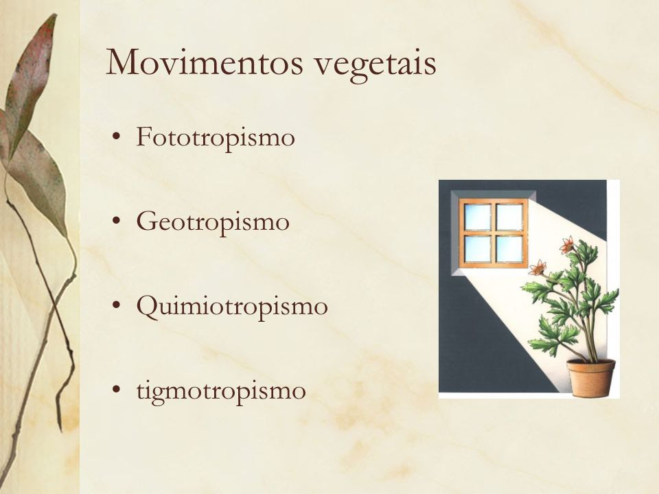 Movimentos vegetais Fototropismo Geotropismo Quimiotropismo