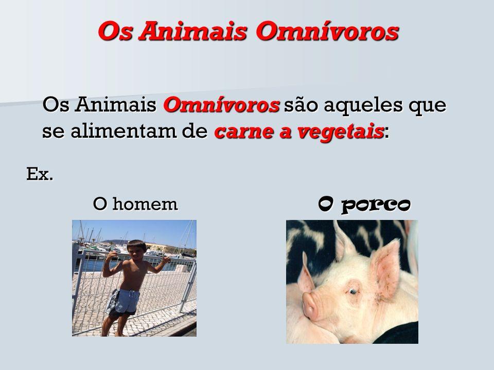 Os Animais OmnívorosOs Animais Omnívoros são aqueles que se alimentam de carne a vegetais: Ex. O homem.