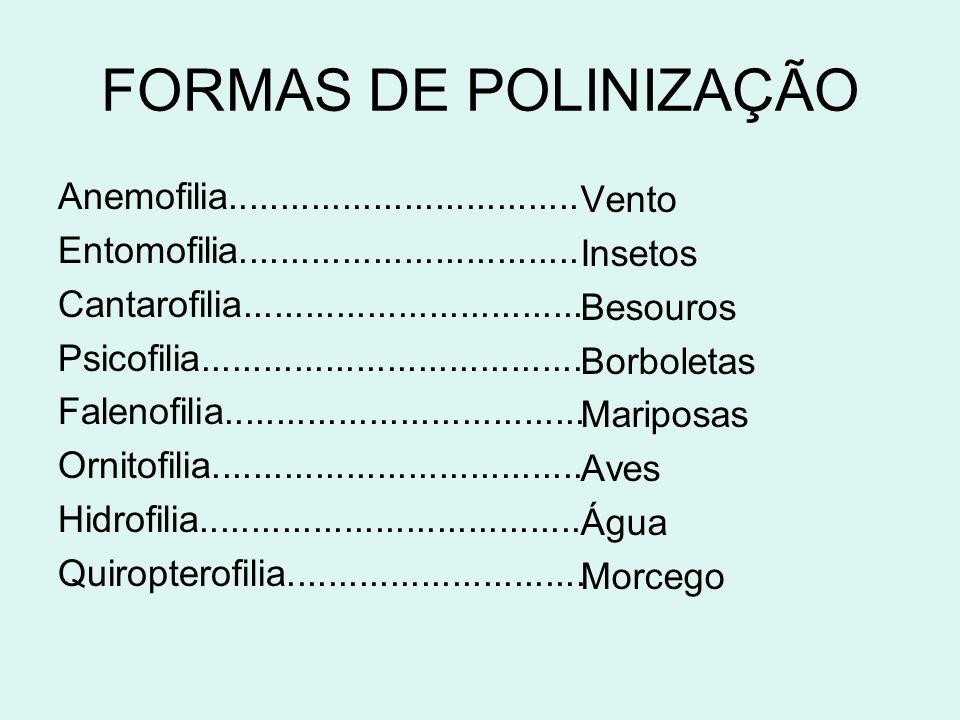 FORMAS DE POLINIZAÇÃO Anemofilia..................................