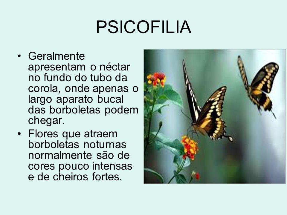 PSICOFILIA Geralmente apresentam o néctar no fundo do tubo da corola, onde apenas o largo aparato bucal das borboletas podem chegar.