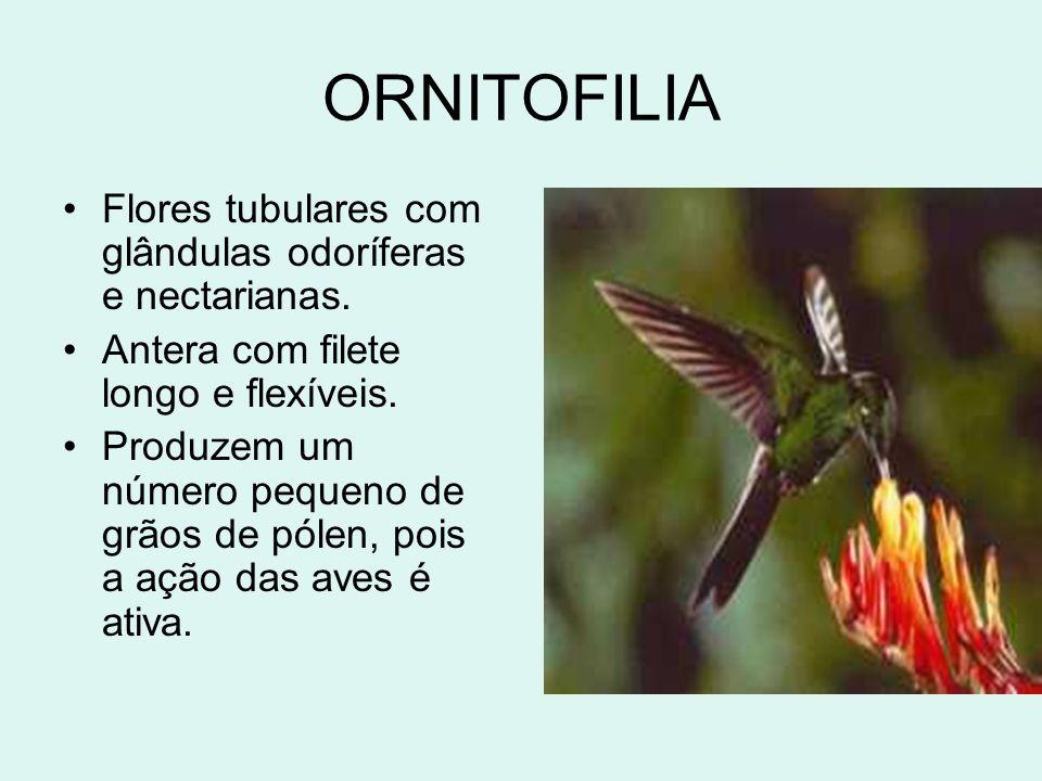 ORNITOFILIA Flores tubulares com glândulas odoríferas e nectarianas.