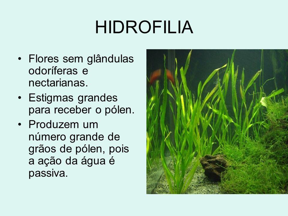 HIDROFILIA Flores sem glândulas odoríferas e nectarianas.