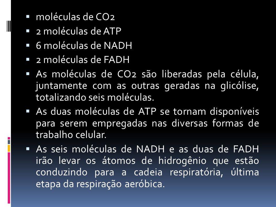 moléculas de CO2 2 moléculas de ATP. 6 moléculas de NADH. 2 moléculas de FADH.