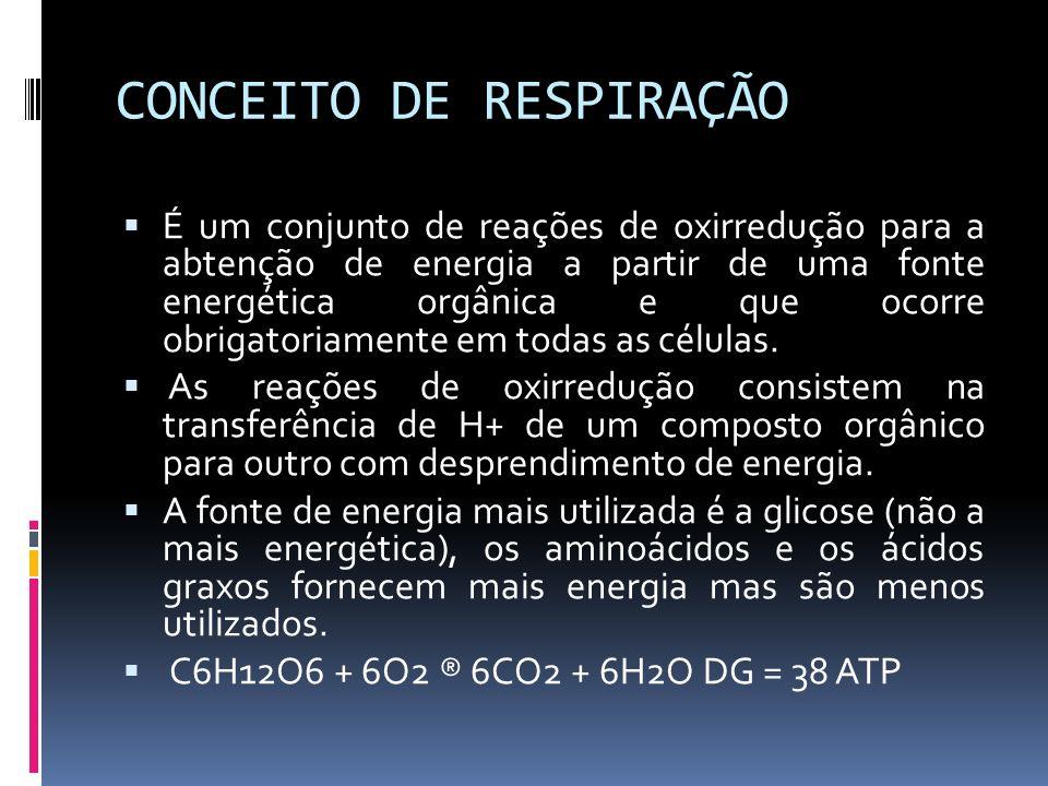 CONCEITO DE RESPIRAÇÃO
