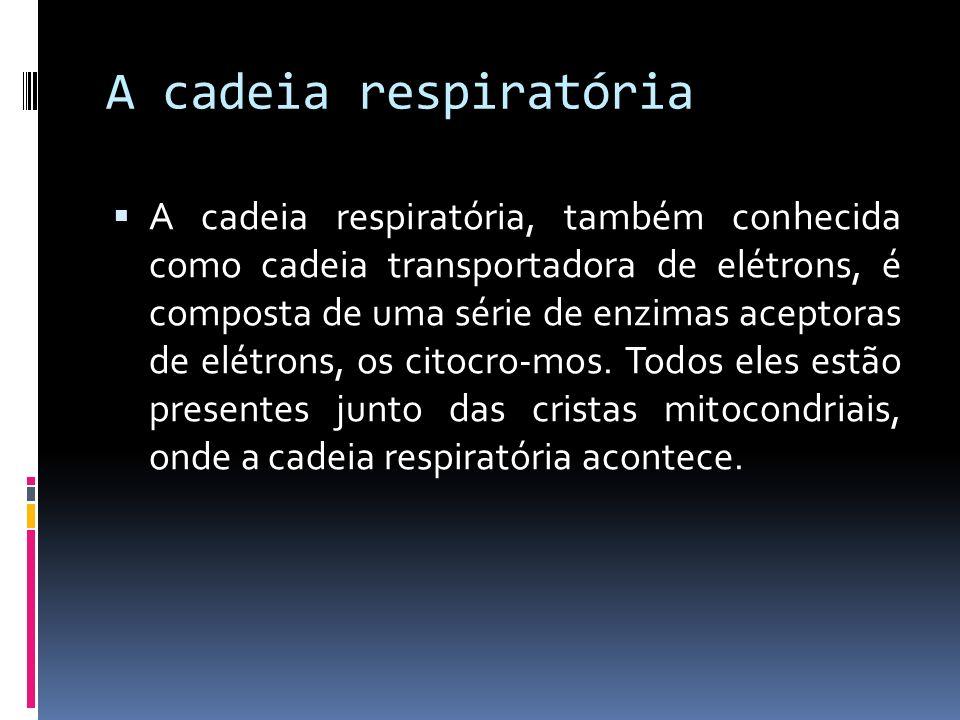 A cadeia respiratória