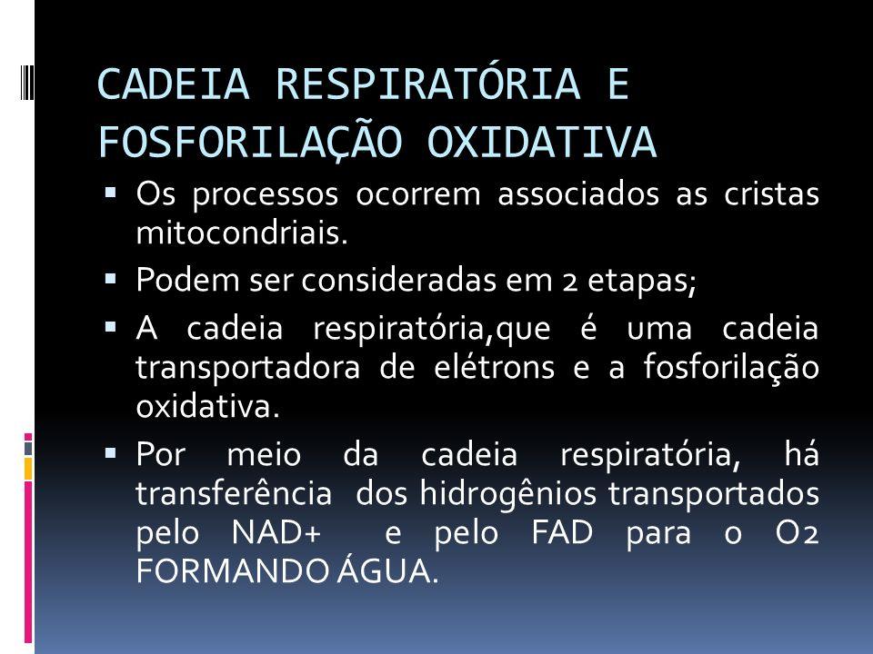CADEIA RESPIRATÓRIA E FOSFORILAÇÃO OXIDATIVA
