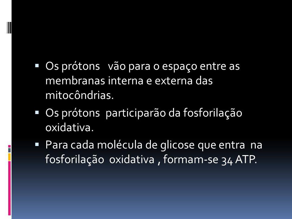 Os prótons vão para o espaço entre as membranas interna e externa das mitocôndrias.