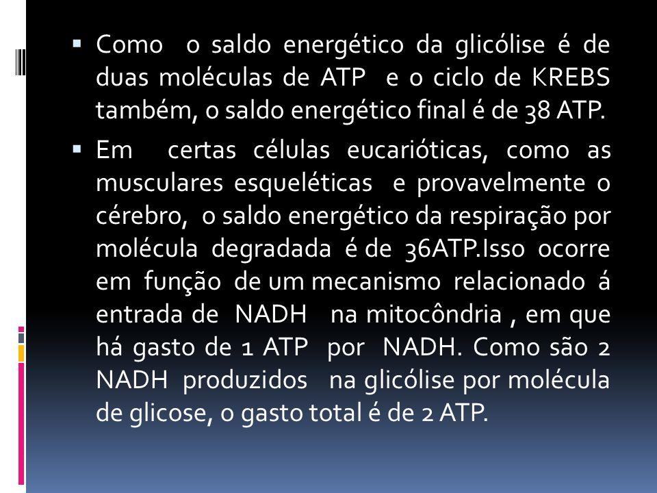 Como o saldo energético da glicólise é de duas moléculas de ATP e o ciclo de KREBS também, o saldo energético final é de 38 ATP.