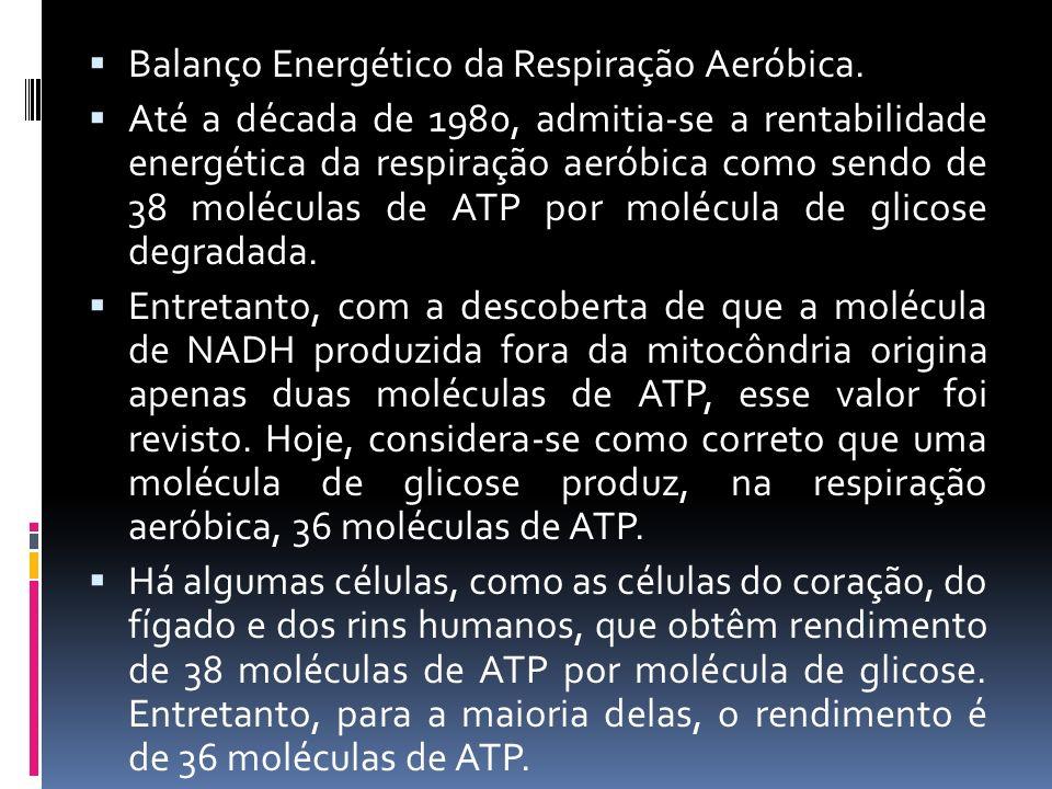 Balanço Energético da Respiração Aeróbica.