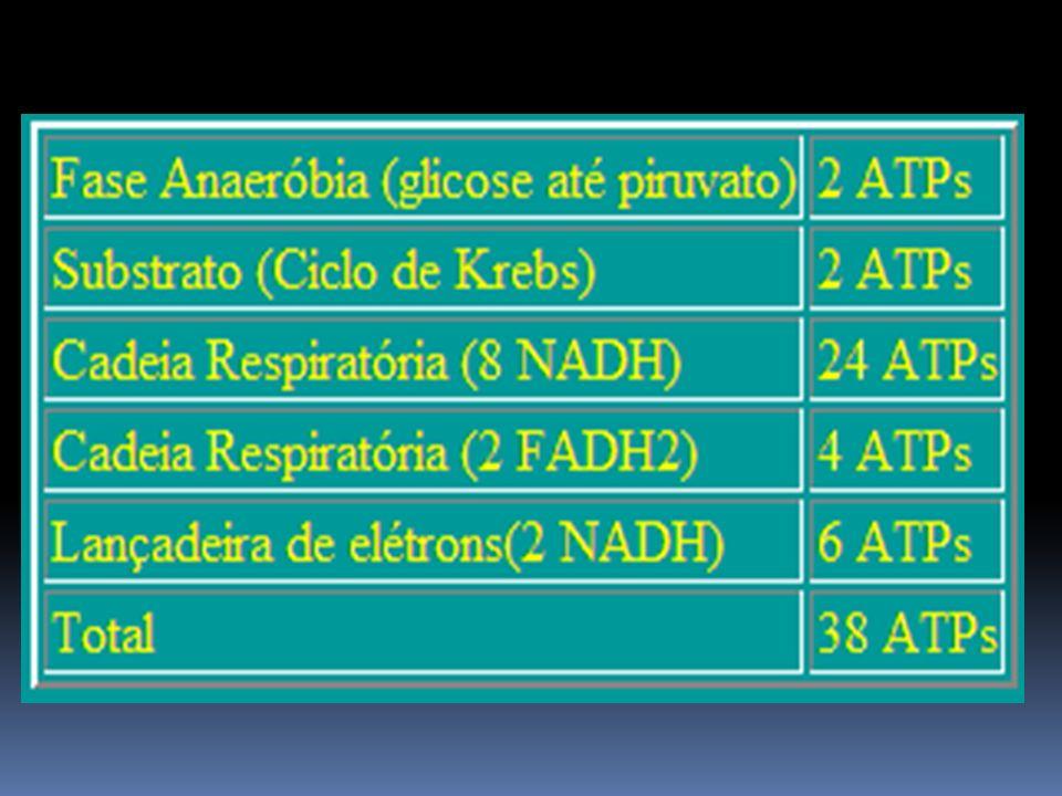 Rendimento Energético da Glicólise Anaeróbia