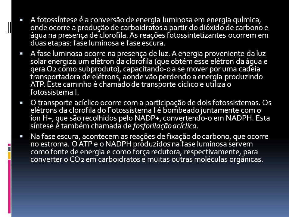 A fotossíntese é a conversão de energia luminosa em energia química, onde ocorre a produção de carboidratos a partir do dióxido de carbono e água na presença de clorofila. As reações fotossintetizantes ocorrem em duas etapas: fase luminosa e fase escura.