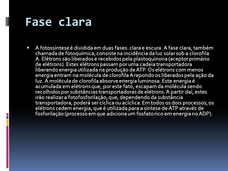 Fase clara