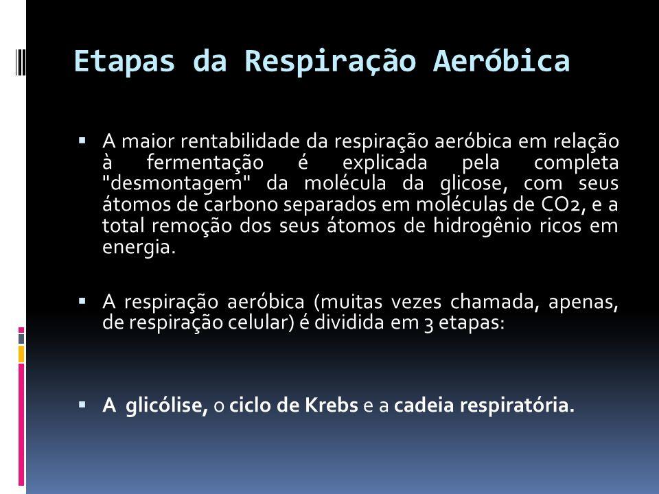 Etapas da Respiração Aeróbica
