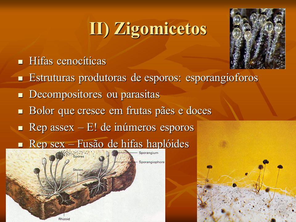 II) Zigomicetos Hifas cenocíticas