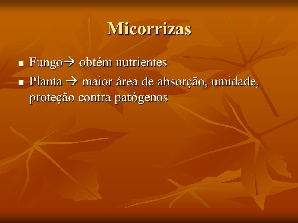 Micorrizas Fungo obtém nutrientes