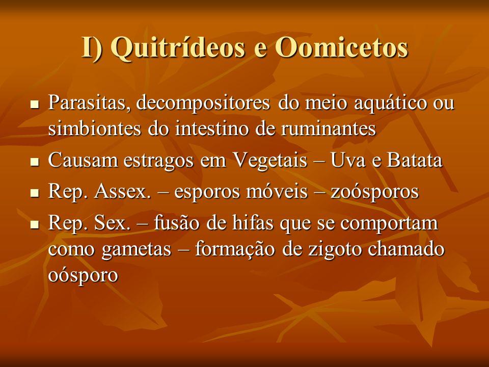 I) Quitrídeos e Oomicetos
