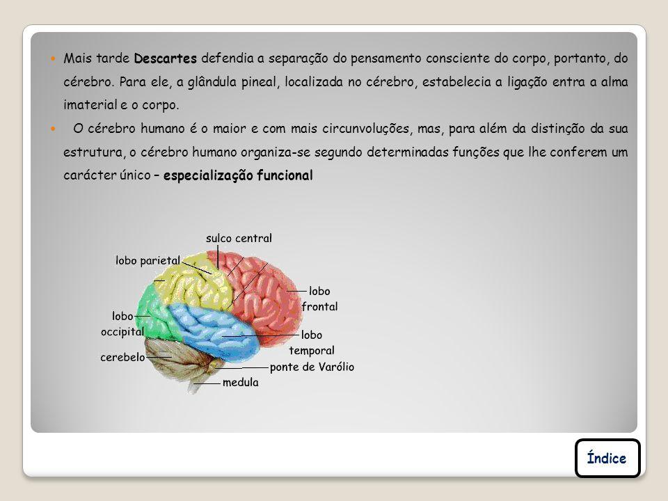 Mais tarde Descartes defendia a separação do pensamento consciente do corpo, portanto, do cérebro. Para ele, a glândula pineal, localizada no cérebro, estabelecia a ligação entra a alma imaterial e o corpo.