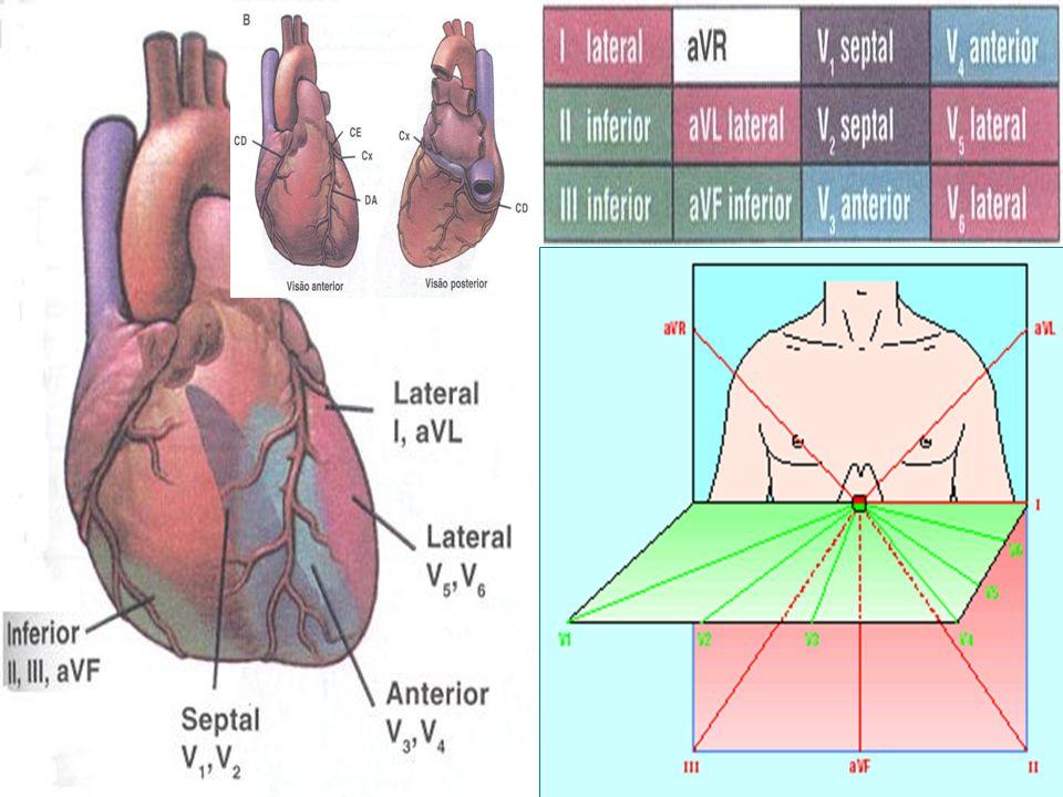 Relações Anatômicas (Cx) (Cx) (CD) (DA) (DA)