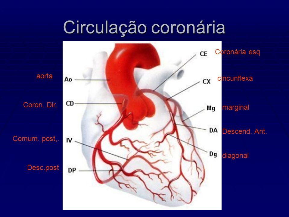 Circulação coronária Coronária esq aorta cincunflexa Coron. Dir.