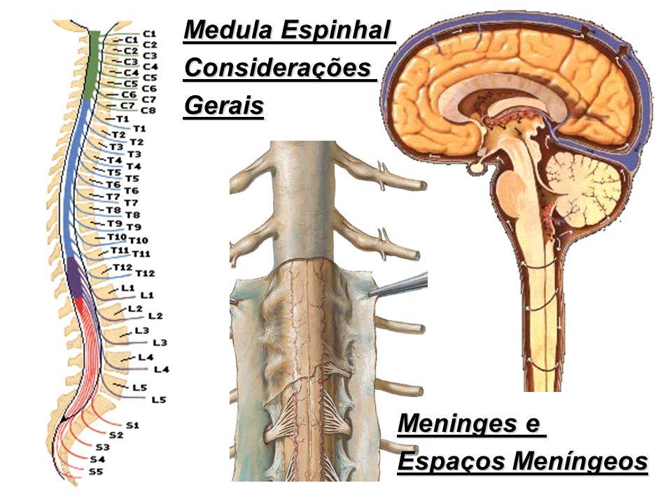 Medula Espinhal Considerações Gerais Meninges e Espaços Meníngeos