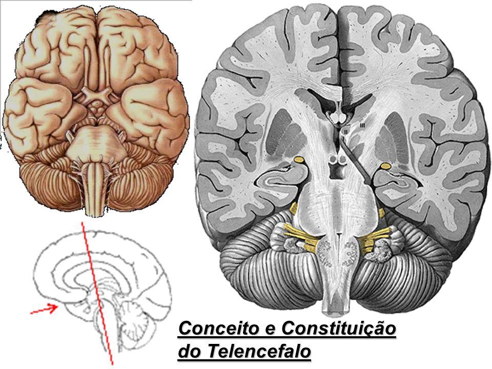 Conceito e Constituição do Telencefalo