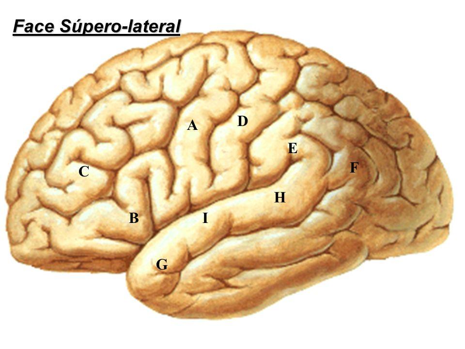 Face Súpero-lateral D A E F C H B I G