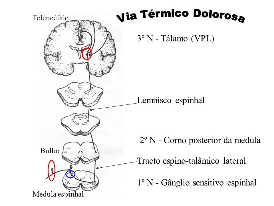Via Térmico Dolorosa 3º N - Tálamo (VPL) Lemnisco espinhal