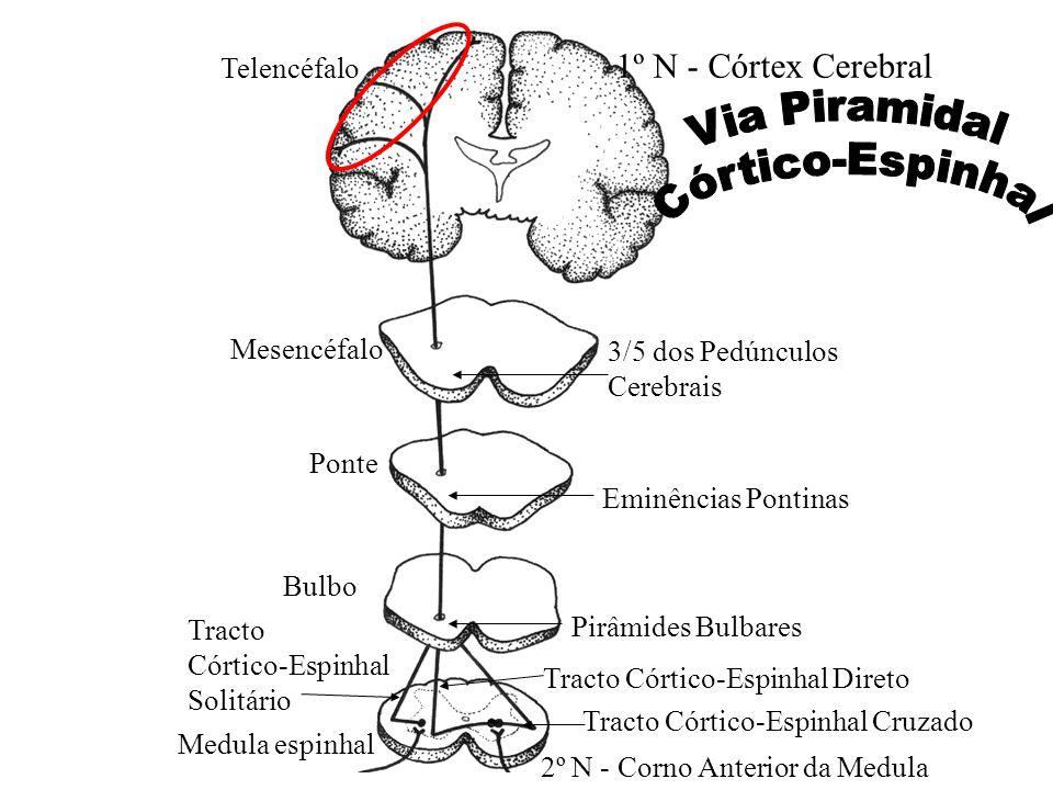 Via Piramidal Córtico-Espinhal 1º N - Córtex Cerebral Telencéfalo