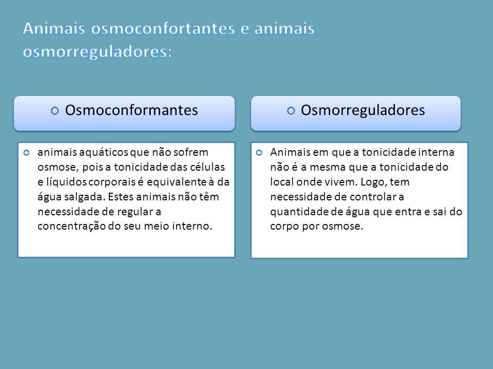 Animais osmoconfortantes e animais osmorreguladores: