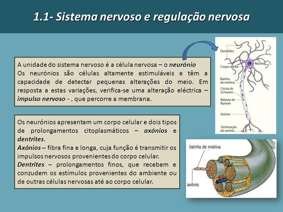 1.1- Sistema nervoso e regulação nervosa