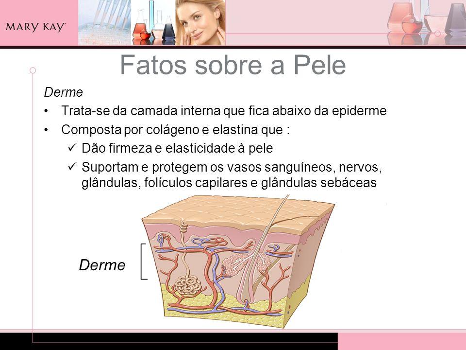 Fatos sobre a Pele Derme Derme