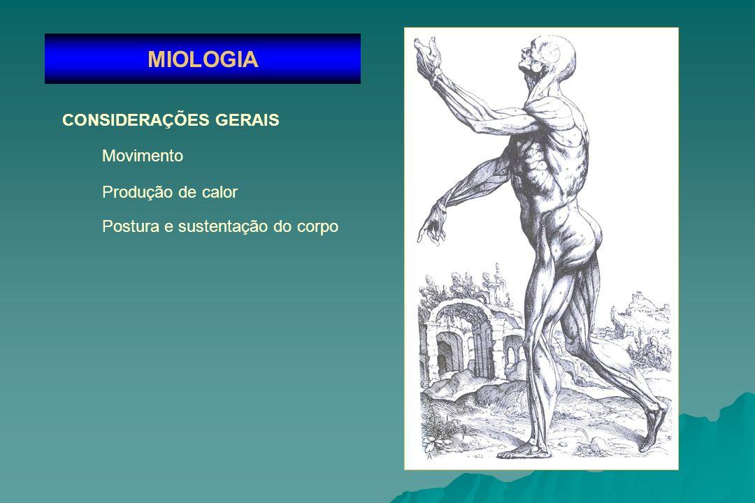 MIOLOGIA CONSIDERAÇÕES GERAIS Movimento Produção de calor