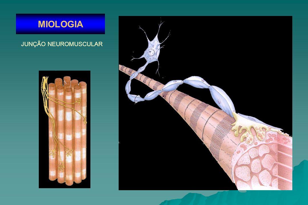 MIOLOGIA JUNÇÃO NEUROMUSCULAR