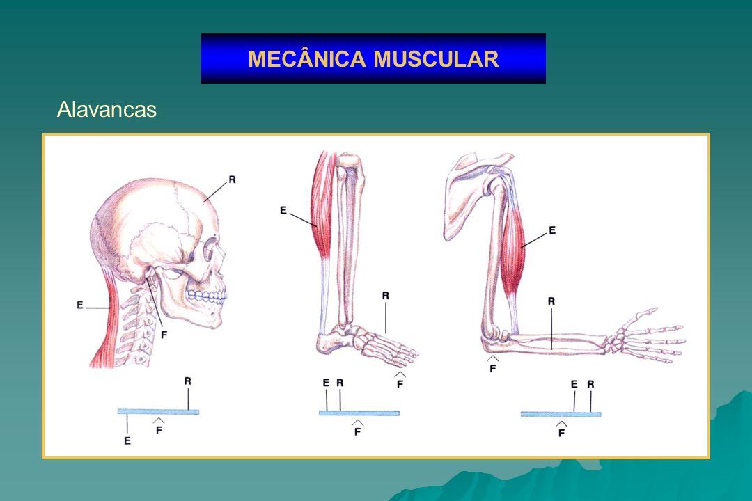 MECÂNICA MUSCULAR Alavancas