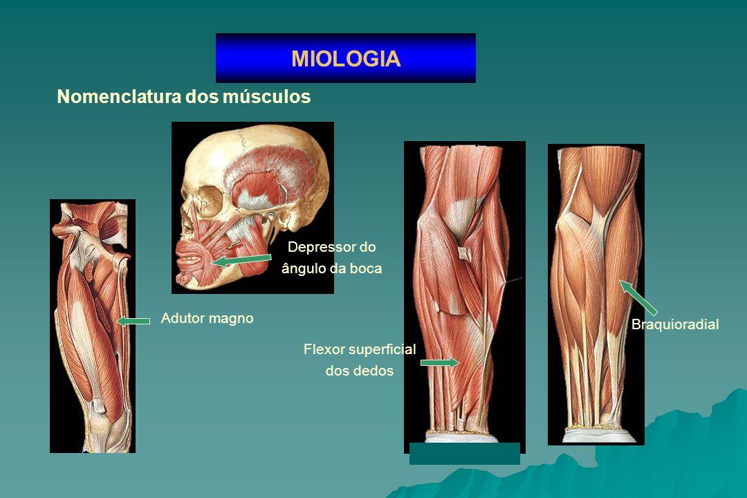 MIOLOGIA Nomenclatura dos músculos Depressor do ângulo da boca