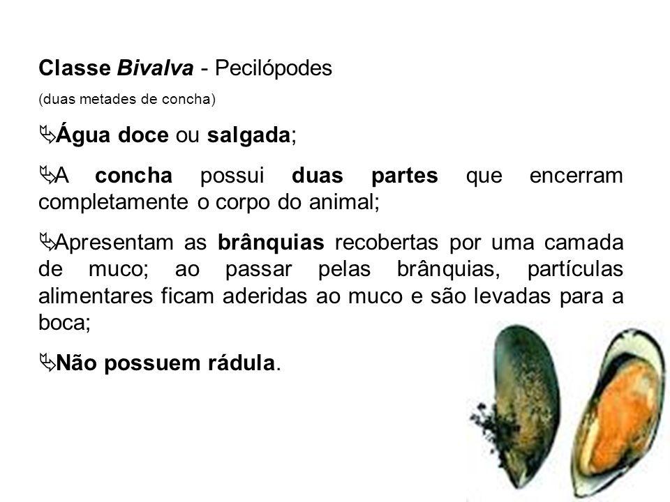 Classe Bivalva - Pecilópodes Água doce ou salgada;