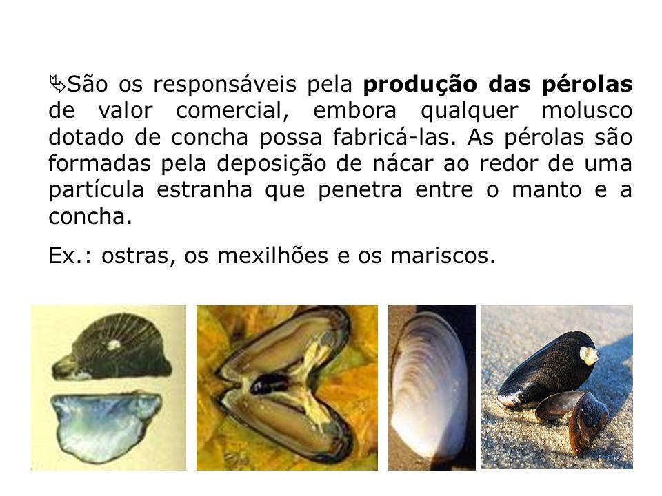 São os responsáveis pela produção das pérolas de valor comercial, embora qualquer molusco dotado de concha possa fabricá-las. As pérolas são formadas pela deposição de nácar ao redor de uma partícula estranha que penetra entre o manto e a concha.