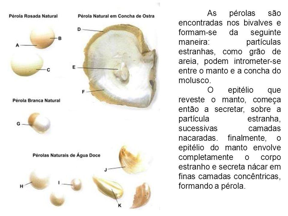 As pérolas são encontradas nos bivalves e formam-se da seguinte maneira: partículas estranhas, como grão de areia, podem intrometer-se entre o manto e a concha do molusco.